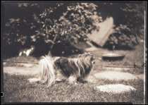 Image of RG3882.PH0003-0976 - Negative, Sheet Film