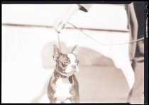 Image of RG3882.PH0003-0998 - Negative, Sheet Film