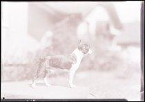 Image of RG3882.PH0003-1041 - Negative, Sheet Film