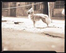 Image of RG3882.PH0003-1273 - Negative, Sheet Film
