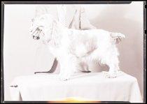 Image of RG3882.PH0003-1060 - Negative, Sheet Film