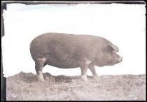 Image of RG3882.PH0003-1106 - Negative, Sheet Film