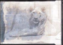 Image of RG3882.PH0003-1229 - Negative, Sheet Film