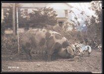 Image of RG3882.PH0003-1160 - Negative, Sheet Film
