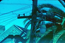 Image of RG4121.54.SF Scenes 12