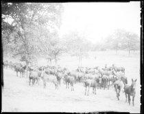 Image of RG3882.PH0020-0004-3 - Negative, Sheet Film