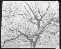Image of RG3882.PH0016-0218 - Negative, Sheet Film