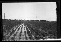 Image of RG4290.PH0-000897 - Negative, Sheet Film