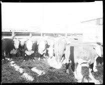 Image of RG3882.PH0032C-0076-4 - Negative, Sheet Film