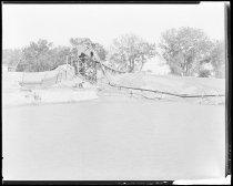Image of RG3882.PH0032C-0098 - Negative, Sheet Film