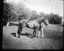 Image of RG5936.PH0-000007 - Negative, Glass Plate