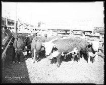 Image of RG3882.PH0032C-0203-5 - Negative, Sheet Film