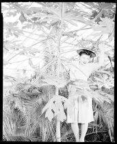 Image of RG3882.PH0049-0004 - Negative, Sheet Film