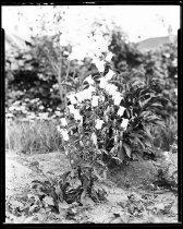 Image of RG3882.PH0049-0137 - Negative, Sheet Film