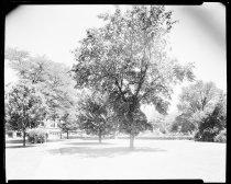 Image of RG2183.PH001937-000707-6 - Negative, Sheet Film