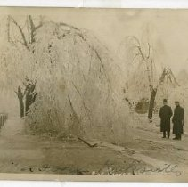 Image of Postcard of ice covered trees in Kirksville