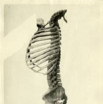 Image of 2010.02 - Left profile view of Halladay Spine