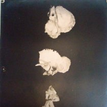 Image of 2010.39 - Photograph of three Temporal bones