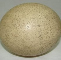 Image of 1974.22 - Ostrich Egg