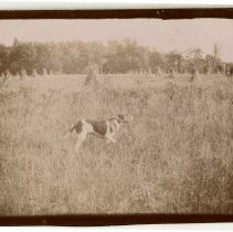 Image of 1999.10 - Dog in Field