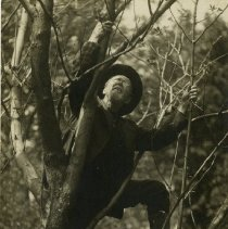 Image of 2010.02 - Andrew Taylor Still Postcard Climbing on Tree Branch