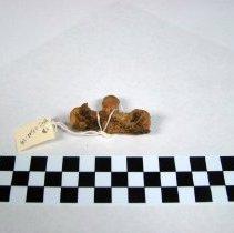 Image of 1992.1501 - Cervical Vertebrae