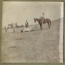 Image of Cow Wrangling