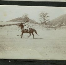 Image of Trotting