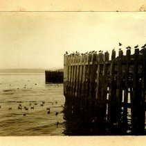 Image of 1997.04 - Dock of Seagulls