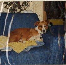 Image of 2011.50 - Kelly the House Dog