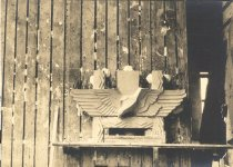 Image of Seagull - Print, Photographic