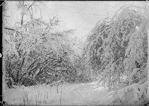 Image of Winter Scene - Transparency, Lantern-slide