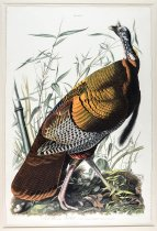 <i>Wild Turkey, Male</i> (1827), double elephant folio, John James Audubon