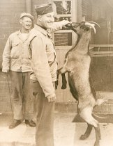 Image of X.1209.3 - Feeding Goat at Fort Wool
