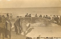 Image of 1956.11.10 - Beached Whale at Buckroe Beach