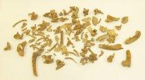 Image of 2015.11.318 - Dog bones