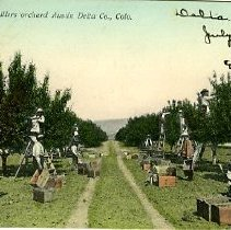 Image of Orchard in Delta, Colo