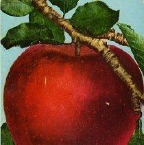 Image of Oregon Apple