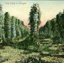 Image of Hop Field in Oregon