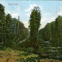 Image of Hop Field