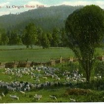 Image of An  Oregon sheep farm
