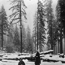 Image of GP5/7.1098 - REMARKS:Outdoor photo of two young women standing in knee deep snow. Pile of snow covered logs in background.  OBJECT DATE:ca. 1890