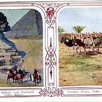 Image of Ostrich Farm, Cairo, Egypt