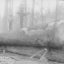 Image of N11499 - COUNT:2  REMARKS:Loading logs on railroad cars, C.C.L. and T. Co. There are two men standing on a log; Douglas County, Oregon.