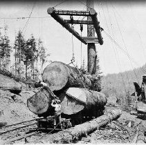 """Image of N11665 - REMARKS:Log boom logging in North western Oregon out of Astoria in 1924. """"A completely rigged boom tree it has 17 guylines one skyline one swing main and one trip."""