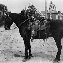 Image of N1429 - REMARKS:Horse owned by L.D. Haines. First Street, Oakland. The old Deardorff Hotel in left rear, livery stable right rear.