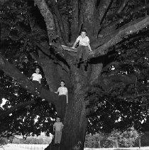Image of N14425 - REMARKS:Carter children in Curry Road tree house; ID: Top-John Carter; (L to R) Loren Carter; Galen Carter; Bottom-Steven Carter. July 8, 1955