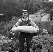 Image of Unidentified farmer holding very large squash