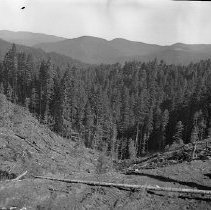 Image of N15355 - REMARKS:View down the slope of a clearcut hill. Showing hills still forested in background. Douglas County, OR. Ca 1950s.  OBJECT DATE:ca 1950s