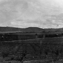 Image of N16982 - REMARKS:Right hand side of the panorama of the George Marsh farm, Lookingglass, OR, ca 1900. Shows orchard trees.  OBJECT DATE:ca 1900